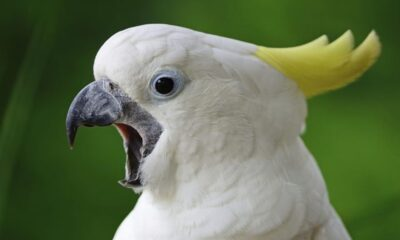 A cockatoo excited to finally see a relatable character on TV.