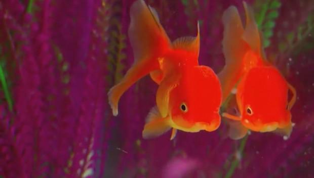 FishCentre
