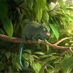 ITFS Audience Award winner Our Wonderful Nature - The Common Chameleon