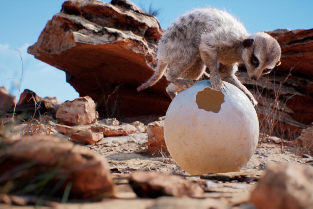 Meerkat (Weta Digital)