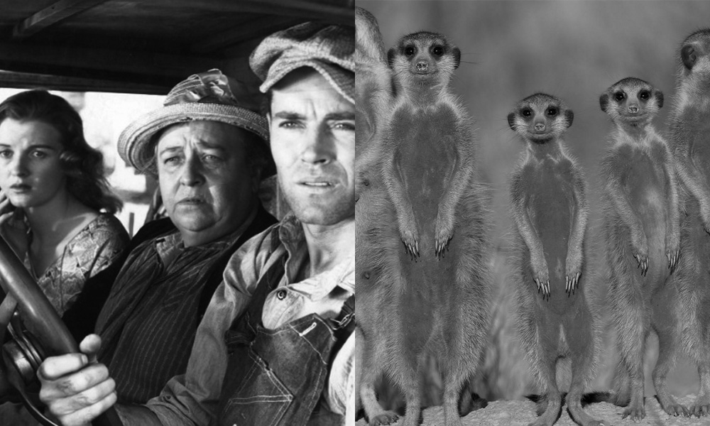 The Grapes of Wrath: Meerkats United
