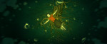 big-fish-and-begonia-post4