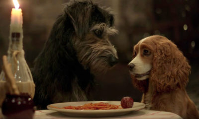 The live-action 'Lady and the Tramp' is one of the high-profile originals debuting at launch on Disney+