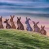 Watership Down (1976)